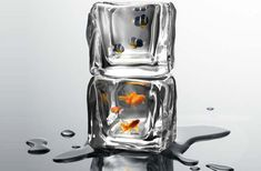 Cool idea by designer Arthur Xin forTreecorona.You definitely have seen the scene of beating away thick ices for fishing in winter. When we see small fish swimming smoothly in the...