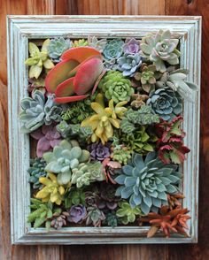 Picture Framed Succulent Vertical by SucculentWonderland on Etsy LOVE THE COLOR!