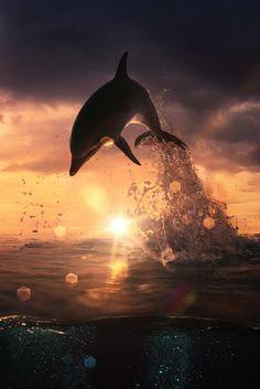 美しいイルカのジャンプ