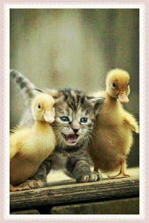 Funny Animal Images For Whatsapp Funny Animal Images, Cute Animals Images, Funny Animals, Bird, Funny Animal Pictures, Birds, Funny Animal, Hilarious Animals, Funny Animal Comics