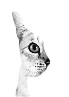Chat de Profile ou Face de Chat ? by Bruno AzuLay. °