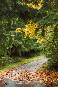Wet driveway in autumn (Washington) by Greg Magee