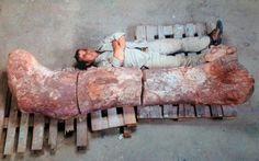 Scoperti resti del dinosauro più grande di sempre #dinosauro #patagonia