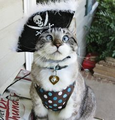 KitNipBox is celebrating  #NationalDressUpYourPetDay by sharing your photos of your furr babies! Like our FB page and use the #KitNipBoxCats hashtag to submit your image! The winner will be featured on all of our social media pages tonight!  Here is Spangles the Cross Eyed kitty dressed up with his best attire! #KitNipBox #crazycatlady #crazycatpeople #catlovers #catlove #catmom #catdad #catnip #catphoto #meow #purr #kitty #catperson