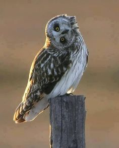 Bubo - love the image of the wise owl. Funny Owls, Funny Cute, Funny Animals, Cute Animals, Funny Birds, Hilarious, Beautiful Owl, Animals Beautiful, Rapace Diurne