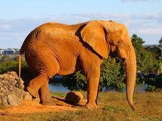 Vida Verde: 3 Animales Africanos en peligro de extinción