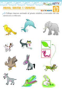 Animali carnivori ed erbivori Italian Language, Preschool, Dads, Science, Education, Torino, Google, Desktop, Anna