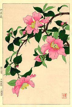 Camellia, Pink  by Kawarazaki Shodo  (published by Unsodo)