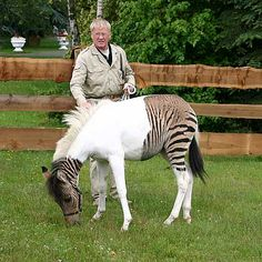 The Stukenbrock safari park reports that although Eclyse has inherited her...