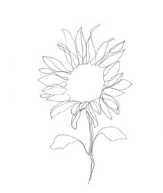 "Minimalist Abstract Botanical Pencil Drawing Archival Art Print ""Graphite Sunflower"""