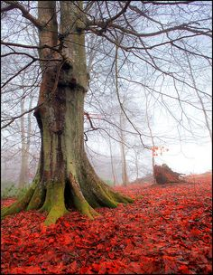 """Stunning Autumn Scenery!  """"  On the Red Carpet by Angus Clyne Via Flickr """""""