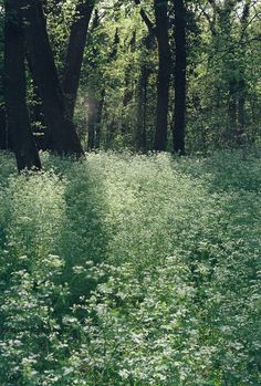 Forest Meadow, Slovenia photo via disgusted