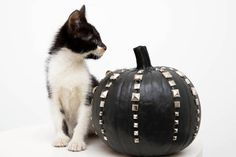 Studded pumpkins + kittens = ❤️