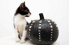 Studded pumpkins + kittens = ❤️