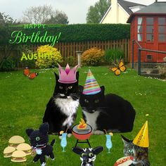 CATachresis: Happy 10th Birthday Austin!!!