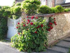 Rózsa ültetése, gondozása Outdoor Structures