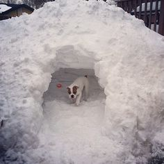 Of course, the easiest way to make a snow fort is simply by digging in to a snowbank. | 33 Ways To Build A Snow Fort You'll Want To Move In To