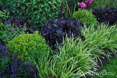 Ogrodowa przygoda Łukasza :) - strona 885 - Forum ogrodnicze - Ogrodowisko