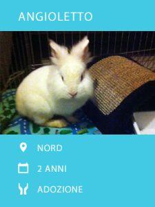 Angioletto ha scoperto che esiste una vita al di fuori della gabbia, facciamogli scoprire anche l'amore di una famiglia tutta per lui! #adozioni #conigli #bunnies