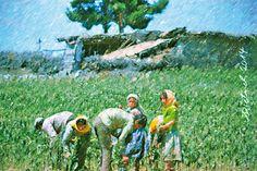 Familie auf dem Feld (Türkei)