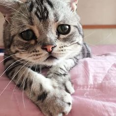 Like really sad. | This May Be The Most Adorably Sad Cat In The Whole World