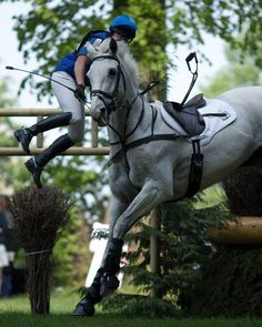 """brideshead-deserted: """"Carolyne Ryan-Bell and Rathmoyle King present… Spontaneous Dismount. All The Pretty Horses, Beautiful Horses, Photo Humour, Cross Country Jumps, Horse Pictures, Crazy Pictures, Show Jumping, Horse Love, Show Horses"""