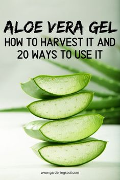 Come on, confess—you have stretch marks, don't you? Have you ever used aloe vera to diminish them? Here is how to use aloe vera for stretch marks removal. Fitness Humor, Healing Herbs, Natural Healing, Natural Medicine, Herbal Medicine, Ayurveda Lifestyle, Healthy Lifestyle, Aloe Vera Uses, Fitness Video