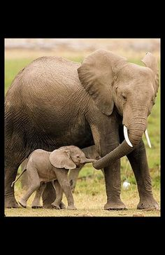 ELEPHANT Mum and Baby #Foto: Michael Poliza --- www.globetrotter-magazin.de. Adorable.