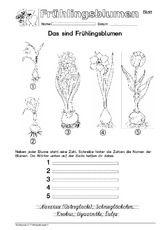 Arbeitsblatt S95 1.pdf Classroom, Learning, Anna, German, School Worksheets, Elementary Schools, First Class, Seasons, Psychics