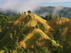 Golden fields in Bandarban, one of the hill districts in southeastern Bangladesh, by M Yousuf Tushar