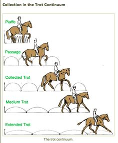 Collection is a frequently misunderstood term. It has nothing to do with putting the horse's face on the vertical and everything to do with gathering up your horse's energy to strengthen his body and to put brilliance into his gaits.
