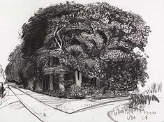 David Hockney, Big Trees Near Warter II, 2008  charcoal on paper, 22.5 x 30.5 in.