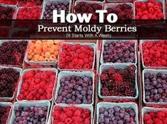 How To Prevent Moldy Berries. Wash them with vinegar. The vinegar kills any mold spores and other bacteria that might be on the surface of the fruit, and voila! Raspberries will last a week or more, and I've had strawberries go almost two weeks without getting moldy and soft. So go forth and stock up on those pricey little gems, knowing they'll stay fresh as long as it takes you to eat them.