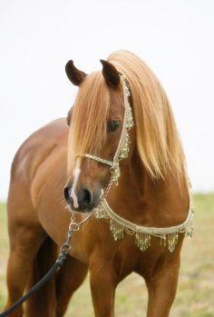 Arabian                                                                                                                                                                                 Más