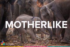 Motherlike — материнский, свойственный матери, как мать  http://amp.gs/tKRP  #treewords