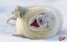 Animales riendose. Fotos de humor.