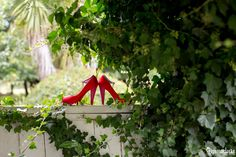 If you want a relaxed country wedding with beautiful gardens and a rustic feel then a Summerlees Wedding in the Southern Highlands is the place for you! Rustic Feel, Beautiful Gardens, Joseph, Highlands, Southern, Photography, Wedding, Shoes, Valentines Day Weddings