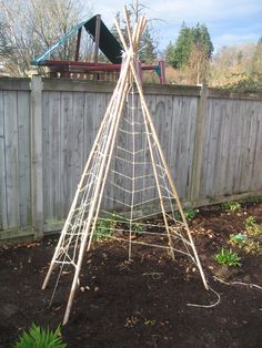 Bamboo and twine structure for pole bean teepee
