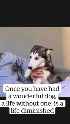 Crazy Funny Videos, Funny Animal Videos, Cute Funny Animals, Funny Dogs, Cute Dogs, Siberian Husky Puppies, Dog Quotes, Shelter Dogs, Big Dogs