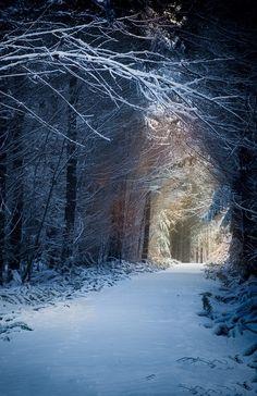 In een bos door de sneeuw lopen