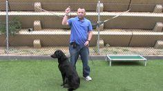 Snug Pet Resort - Reading Dog Behavior