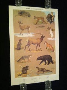 ORIGINAL 1965 NED SMITH PA GAME COMMISSION POSTER LITHO PRINT 30x20 RARE MINT !!