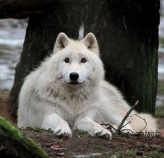 .I just want to pet it...@.@ and maybe cuddle into it's fur