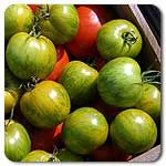 Organic Green Zebra Tomato -  - Succulent, sweet and zingy. Medium-sized, 4-5 oz fruits start out pale green with dark green stripes that soften and turn yellow when ripe. Perfect exteriors; fruits hold up under adverse conditions and rarely crack. Grows well in the greenhouse, too!