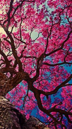 Reader X Crush - Chapter Beneath The Cherry Blossom Tree- Reader X Crush - Chapter Beneath The Cherry Blossom Tree - Wattpad- Beautiful Nature Wallpaper, Beautiful Landscapes, Beautiful Flowers, Simply Beautiful, Frühling Wallpaper, Wallpaper Backgrounds, Vintage Backgrounds, Vintage Wallpapers, Trendy Wallpaper