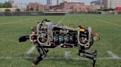 "Researchers at MIT have announced the latest developments in their robotic cheetah project. The project aims to provide insights into how cheetahs can move so quickly. The cheetah is now ""wireless"" and is electrically powered."