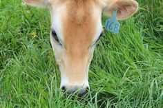 Organic Valley: Happy Cows, Healthy Milk