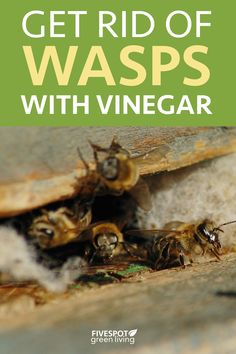 Wasp Trap Bait, Wasp Traps, Natural Wasp Repellent, Insect Repellent, Get Rid Of Wasps, Bees And Wasps, Peppermint Oil Doterra, Wasp Killer, Wasp Removal