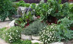 Edible Landscape In Raised Beds | Practical Edible Landscaping Ideas Perfect For Every Garden
