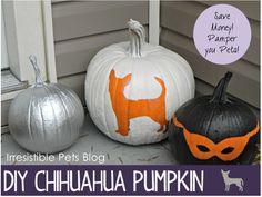 DIY Chihuahua Pumpkin from IrresistiblePets.com